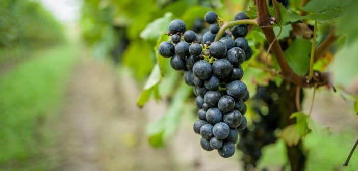 L'achat/vente de domaines viticoles